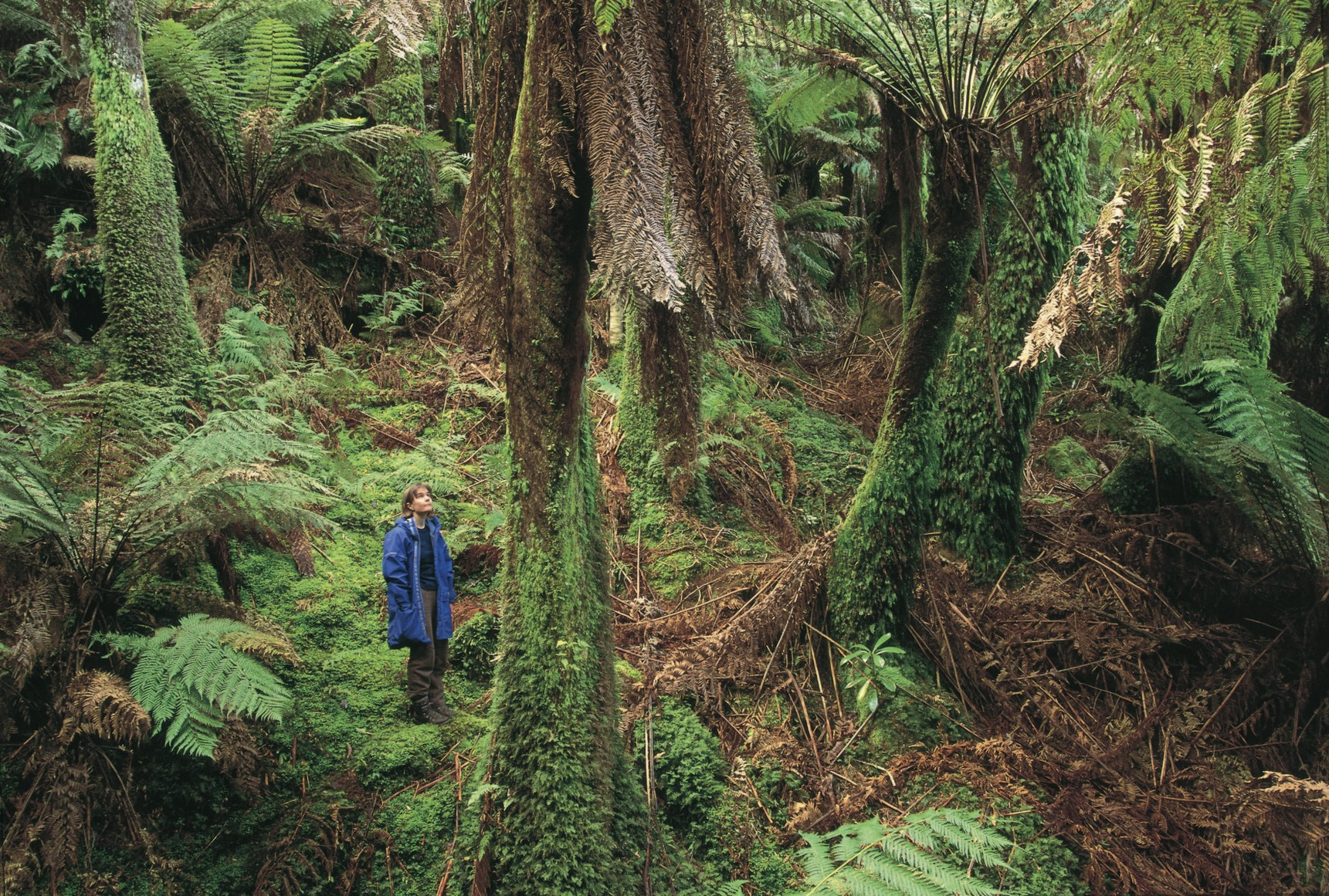 aboriginal plants uses coastal queensland pdf